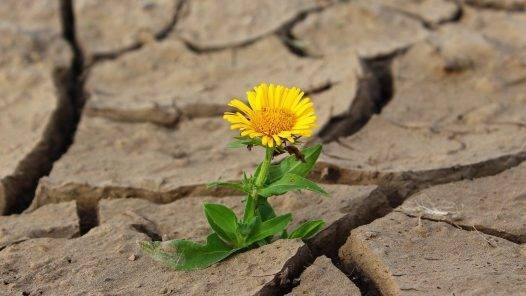 Flower Life Crack Desert Drought  - klimkin / Pixabay