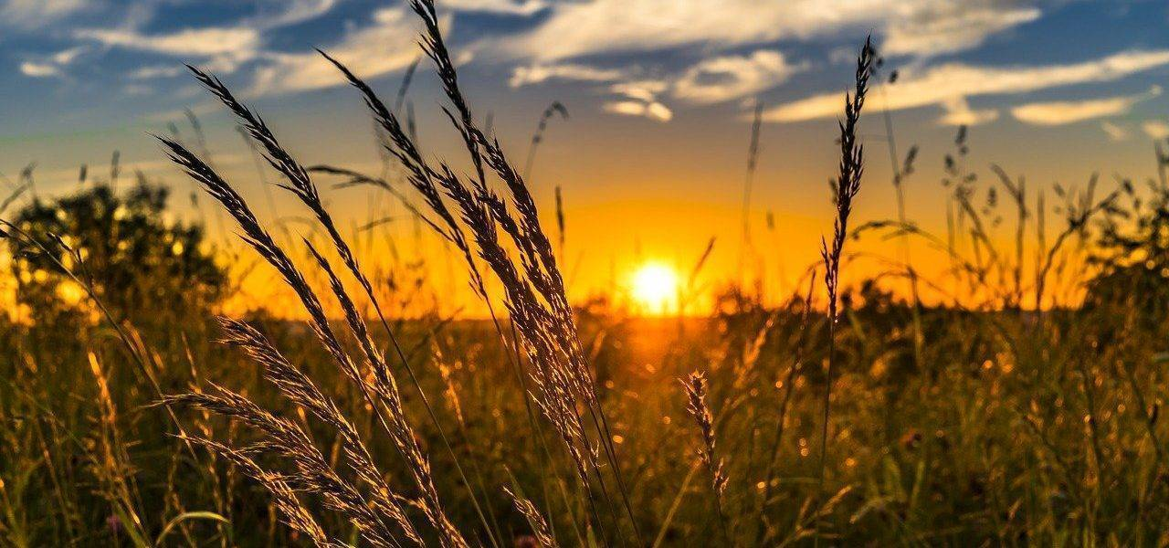Summer Sunset Meadow Nature  - FelixMittermeier / Pixabay