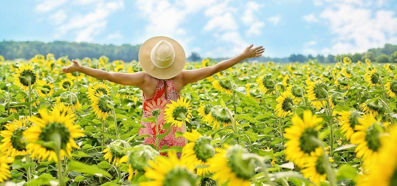 Sunflowers Field Woman Yellow  - JillWellington / Pixabay