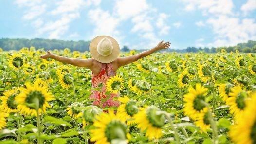 Sunflowers Field Woman Yellow  - JillWellington / Pixabay
